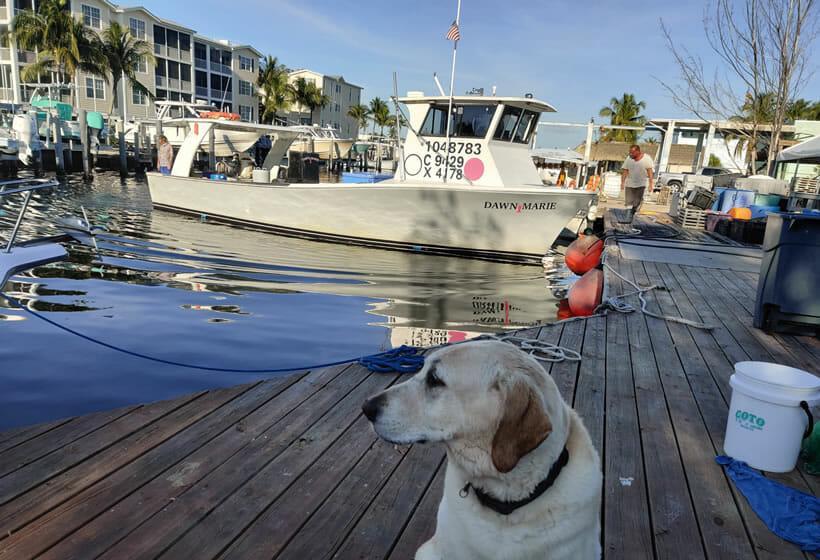 Florida Keys Lobster Trap Yard